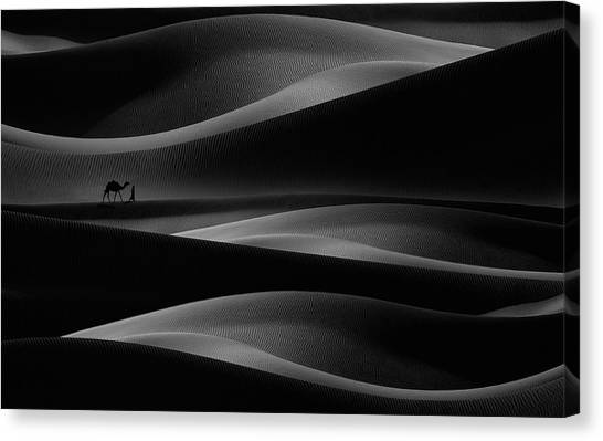 Camels Canvas Print - Dance Lines by Nidhal Alsalmi