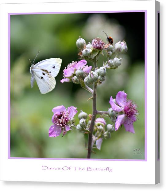Dance Of The Butterfly Canvas Print