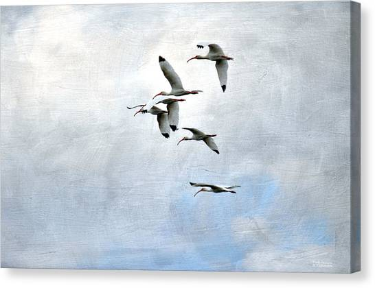 Dance Of The Ibis Canvas Print