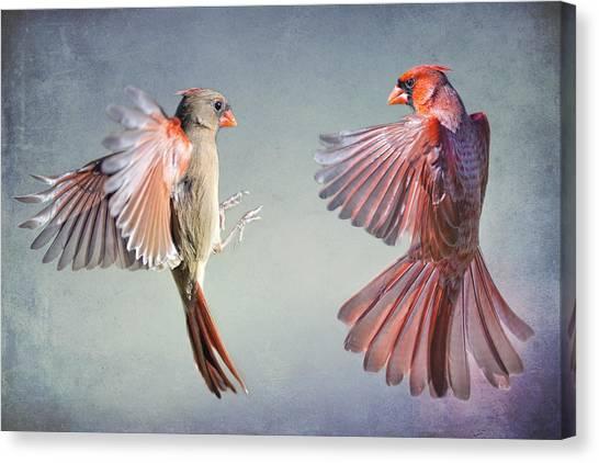 Dance Of The Redbirds Canvas Print