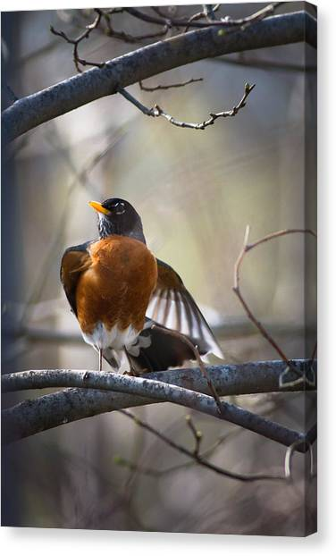 Dance Of The Robin Canvas Print
