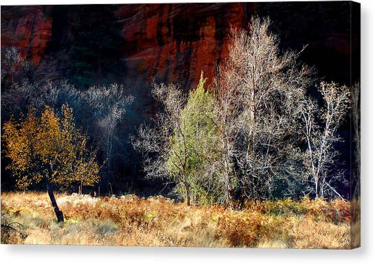 Dance Of Trees Canvas Print