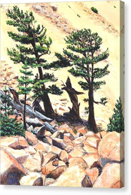 Dancing Bristlecone Canvas Print