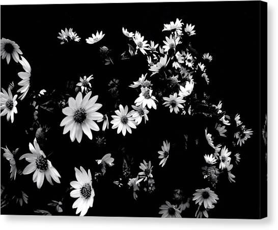 'dancing Daisies' Canvas Print