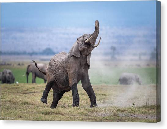 Dancing Elephant Canvas Print by Jeffrey C. Sink