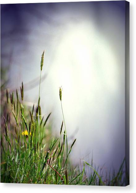 Dancing Grass Canvas Print