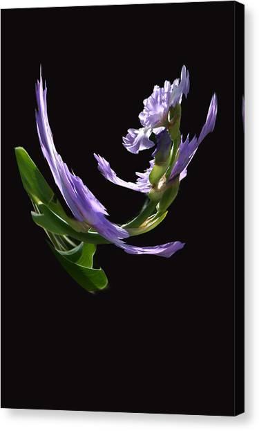Dancing Iris 2 Canvas Print