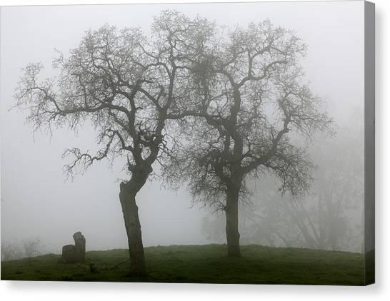 Dancing Oaks In Fog - Central California Canvas Print
