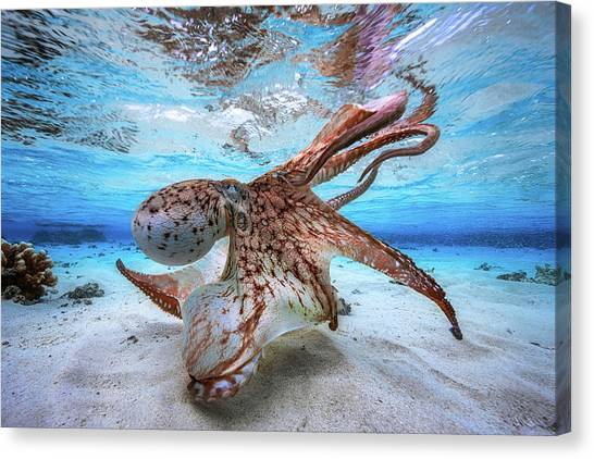 Octopus Canvas Print - Dancing Octopus by Barathieu Gabriel