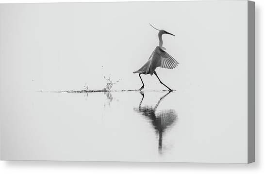 Winged Canvas Print - Dancing On The Water by Mauro Rossi