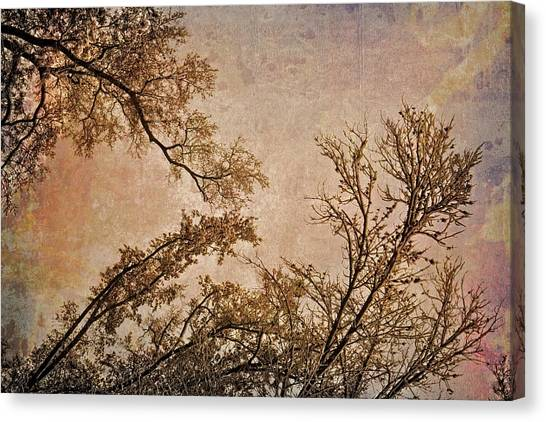 Dancing Trees Canvas Print