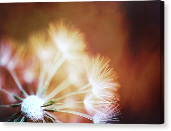 Passionate Canvas Print - Dandelion - Fire by Marianna Mills