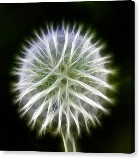 Canvas Print featuring the photograph Dandelion Abstract by Omaste Witkowski