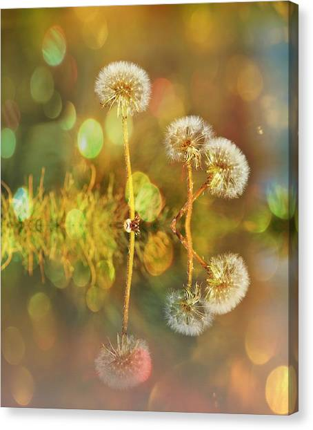 Dandelion Delight Canvas Print