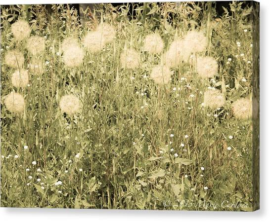 Dandelion Drifts Canvas Print by Marie  Cardona