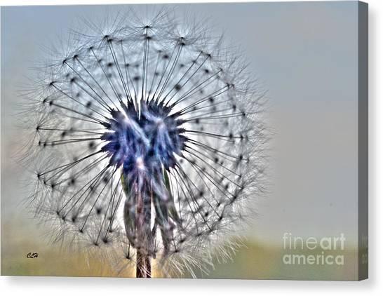 Dandelion Glow Canvas Print