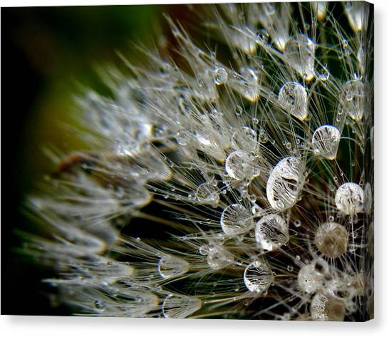 Dandelion Jewels Canvas Print