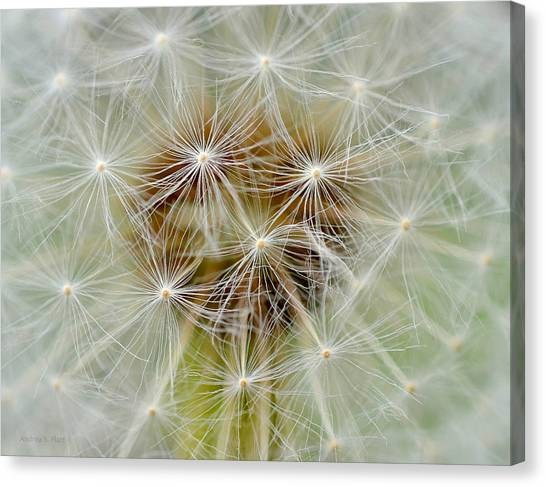 Dandelion Matrix Canvas Print