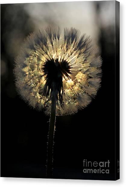 Dandelion Sunrise - 1 Canvas Print