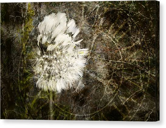 Canvas Print featuring the photograph Dandelions Don't Care About The Time by Belinda Greb