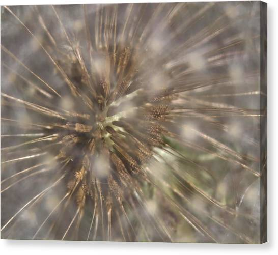 Dandillion Seed Head Canvas Print