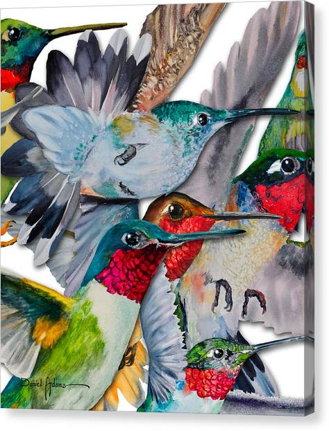 Da133 Hummingbirds By Daniel Adams Canvas Print
