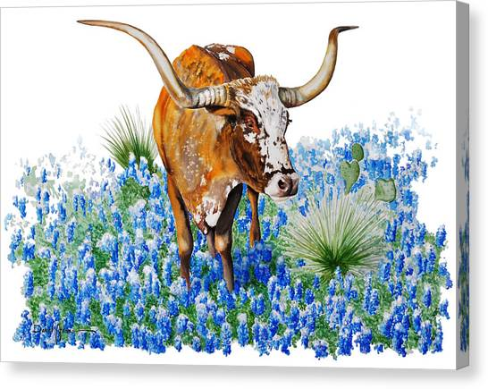 Da102 Longhorn And Bluebonnets Daniel Adams Canvas Print