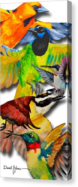 Da131 Multi-birds By Daniel Adams Canvas Print