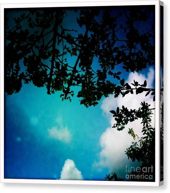 Dappled Sky Canvas Print