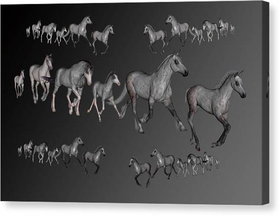 Draft Horses Canvas Print - Dapples by Betsy Knapp