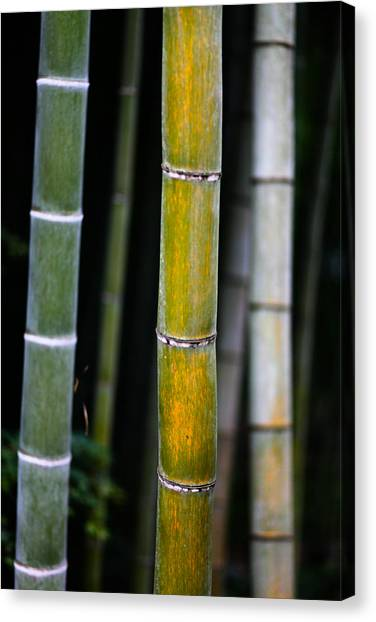 Dark Bamboo Canvas Print