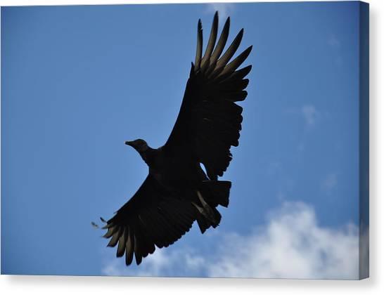Dark Eagle  Canvas Print