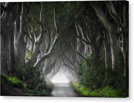 Tunnels Canvas Print - Dark Hedges by Nicola Molteni
