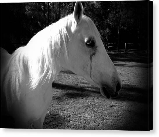 Dark Horse 2 Canvas Print by Chasity Johnson
