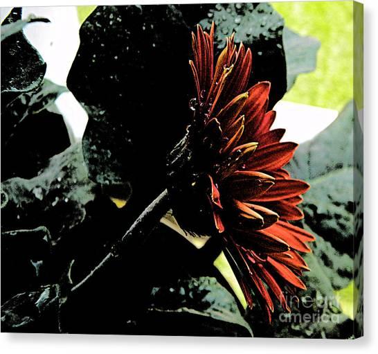 Dark Love Canvas Print by Lorraine Heath