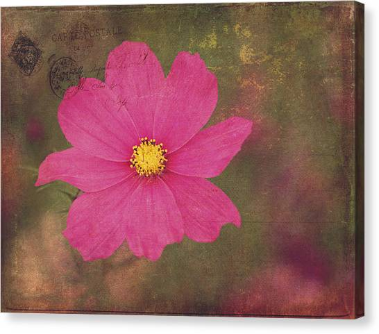 Dark pink cosmo flower photograph by maria angelica maira dark pink cosmo flower canvas print by maria angelica maira mightylinksfo