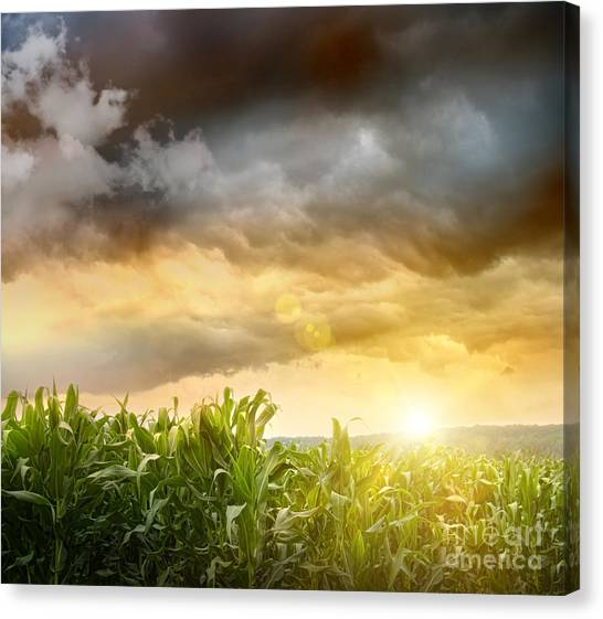 Dark Skies Looming Over Corn Fields  Canvas Print