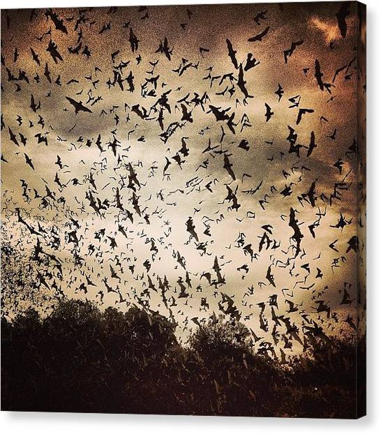 Bat Canvas Print - Dark #sky /// #bat #bats #sanantonio by Nick Lucey