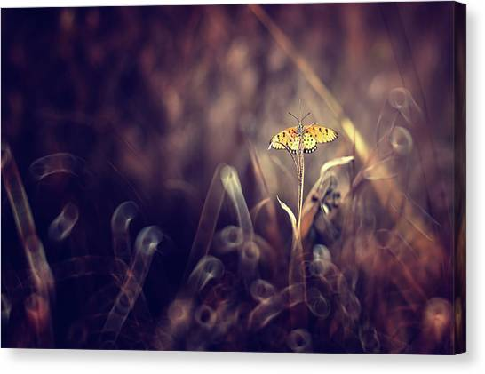 Butterfly Canvas Print - Dark Violet by Donald Jusa