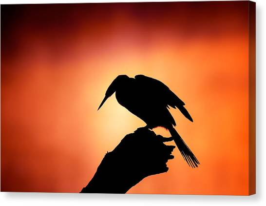 Perching Birds Canvas Print - Darter Silhouette With Misty Sunrise by Johan Swanepoel