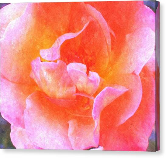 David Austins  Old World Rose Canvas Print by Rosemarie E Seppala