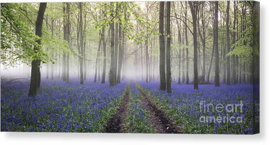Dawn Bluebell Wood Panoramic Canvas Print by Tim Gainey