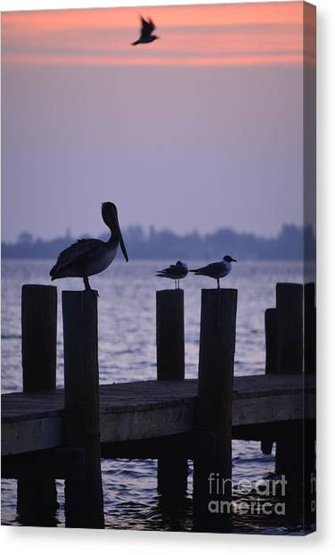 Dawn Brings Hungry Birds Canvas Print