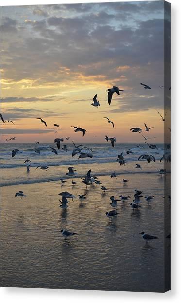 Dawn Gulls Canvas Print