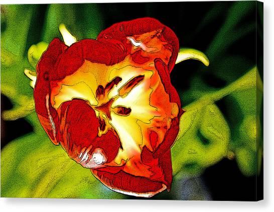 Dawn Of A Tulip Canvas Print