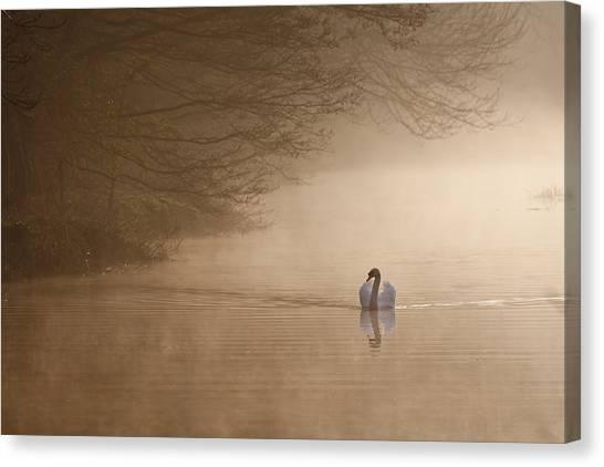 Dawn Swan Canvas Print
