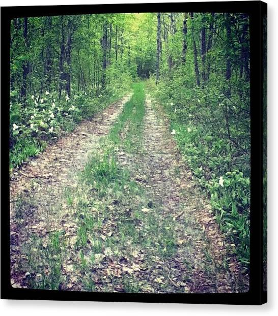 Forest Paths Canvas Print - Day 141 Of #p365 #project365 by Megan Noble