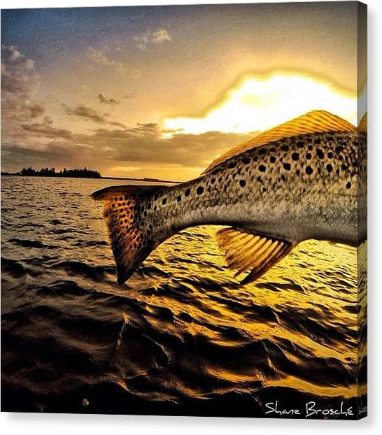 Trout Canvas Print - Day Dreaming Again! @inletville by Shane Brosche