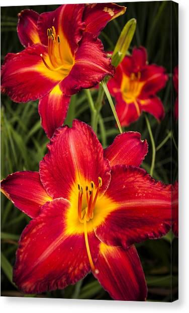 Daylily Canvas Print - Day Lilies by Adam Romanowicz