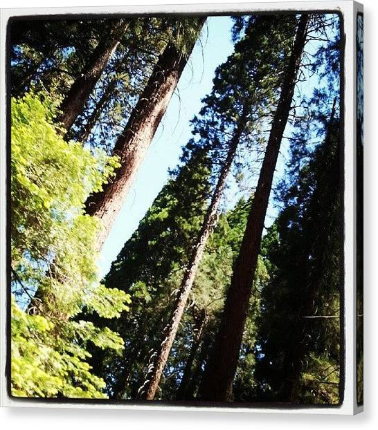 Redwood Forest Canvas Print - Day Trip by Angie Jones
